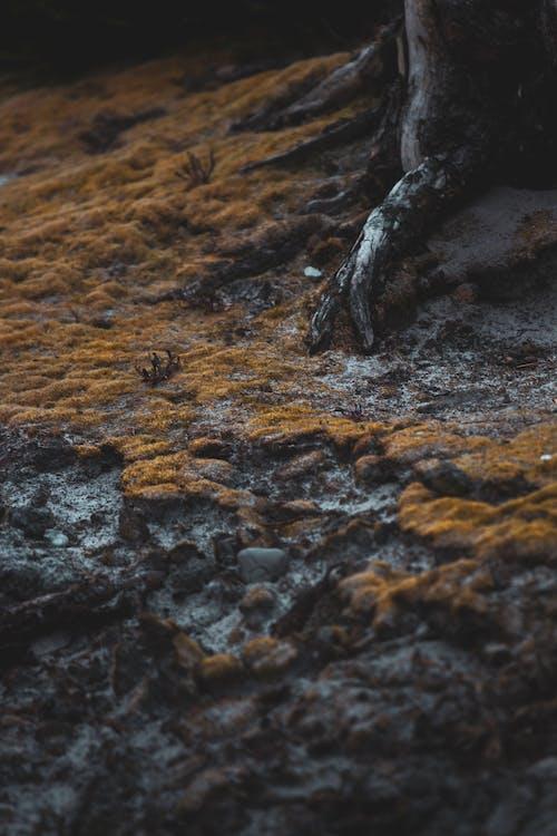 Free stock photo of root, tree