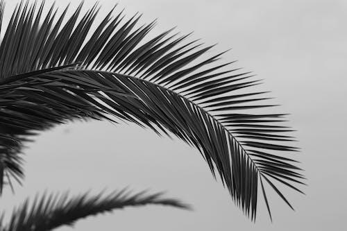 Fotobanka sbezplatnými fotkami na tému botanika, čerstvý, čierna a biela