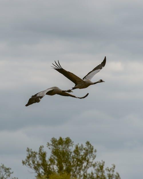 Free stock photo of beauty of nature, bird, bird flying