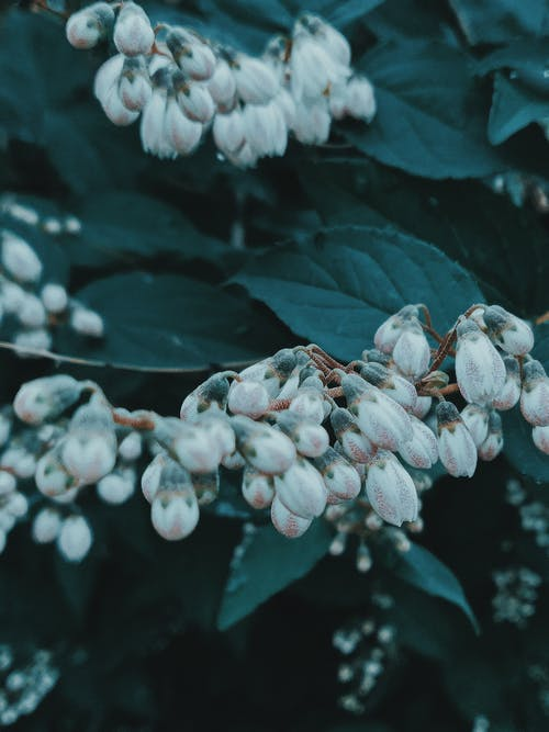 Immagine gratuita di agricoltura, ambiente, arbusto, aroma
