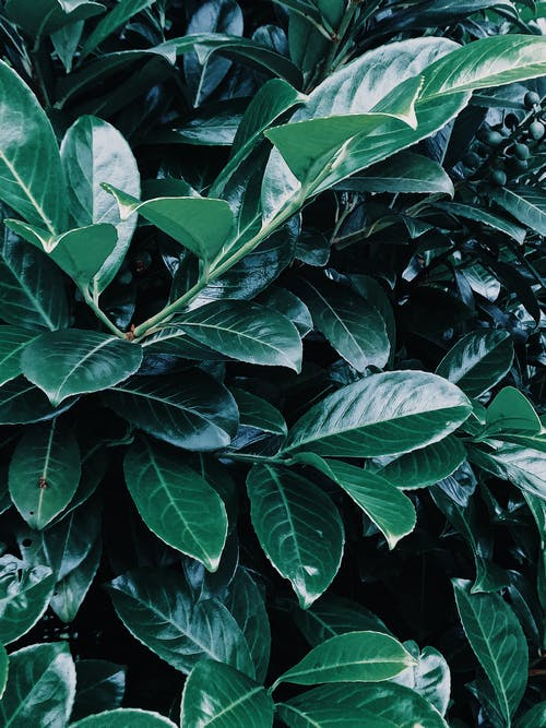 Beautiful dark green leaves of exotic plant with sharp edges in garden in daylight