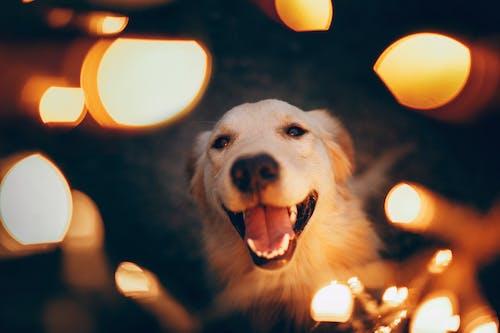 Happy dog in lights of garland