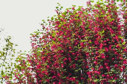 Free stock photo of bush, flower, green