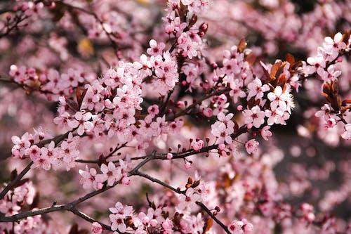 Fotos de stock gratuitas de aroma, aromático, bonito