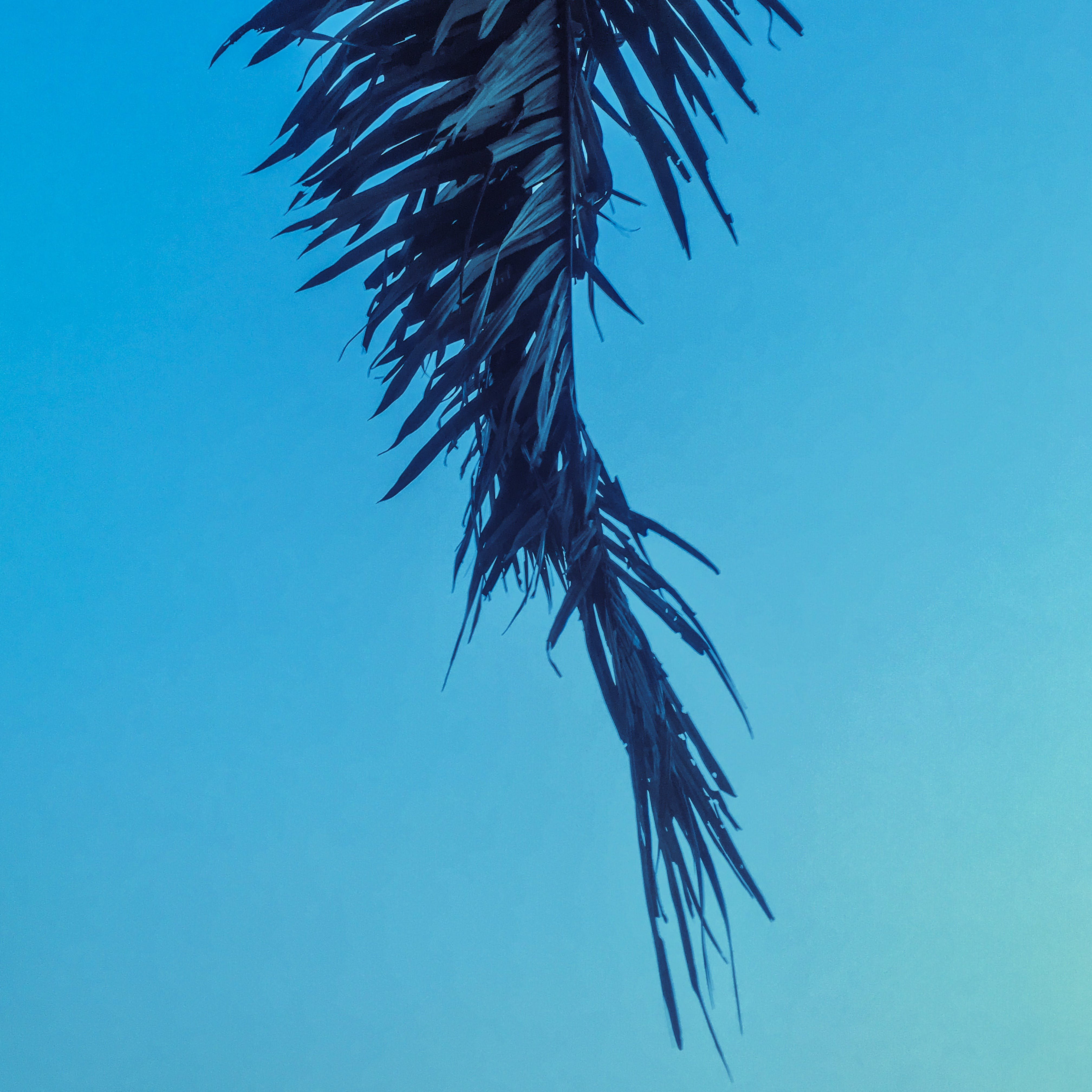 Free stock photo of blue, leaves, nature, palm