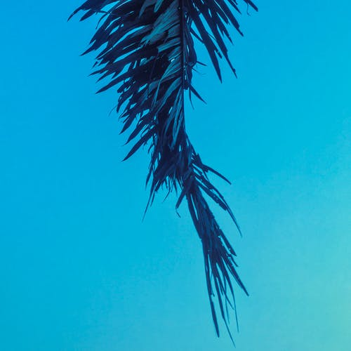 Free stock photo of blue, nature, palm, palm leaves
