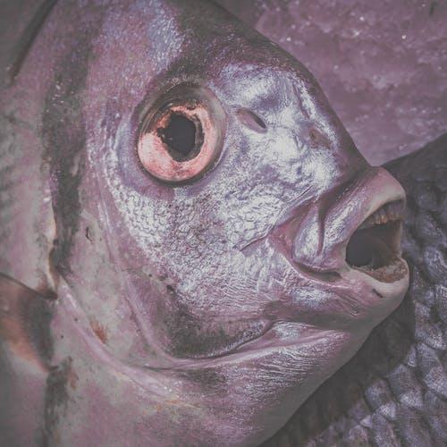 Immagine gratuita di mercato, mercato del pesce, morto, pesce