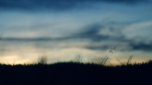 Kostenloses Stock Foto zu abend, bäume, dämmerung, dunkel