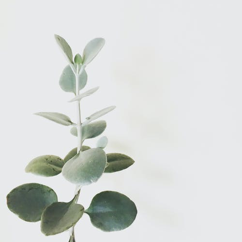 Delicate green plant in white background