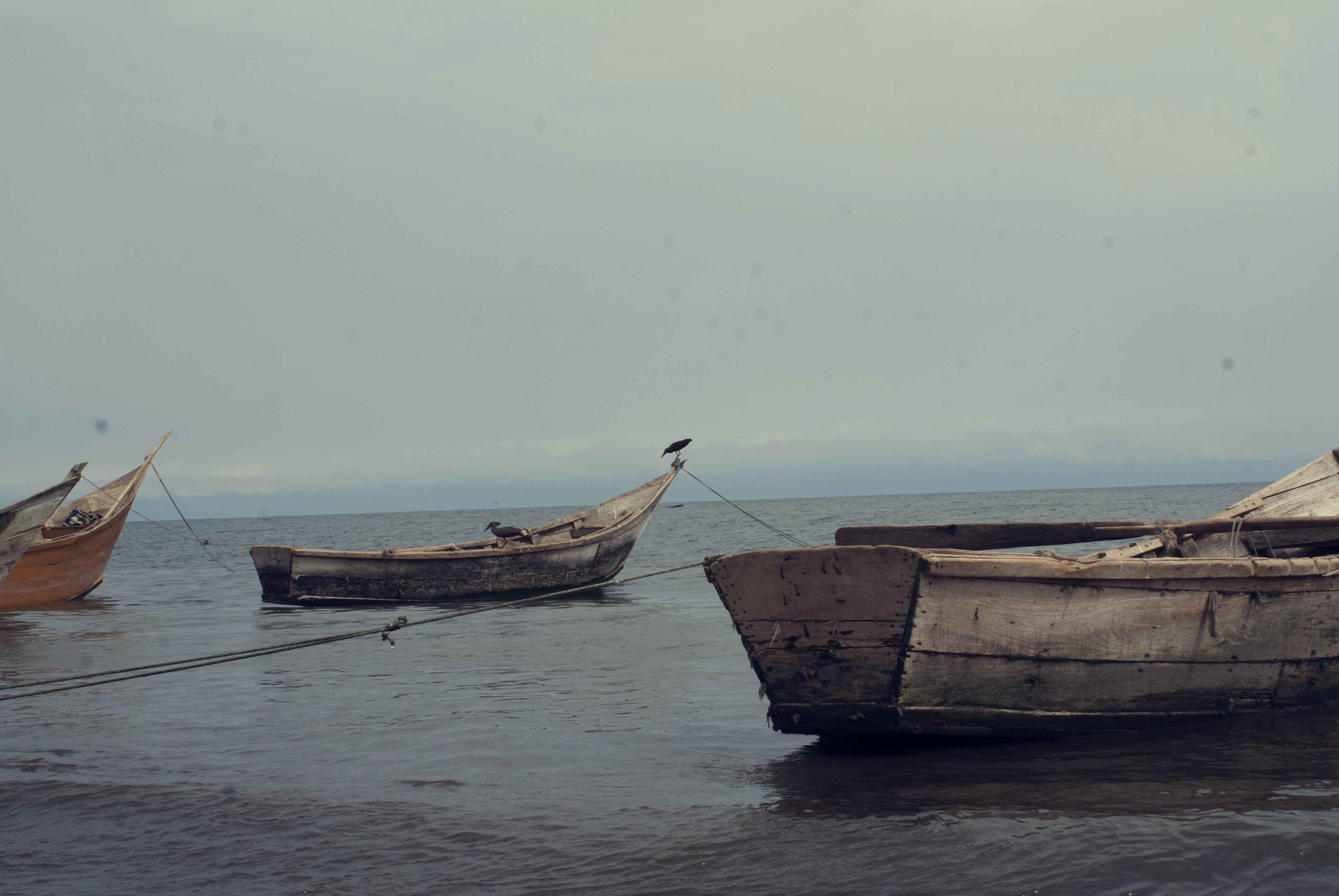 Free stock photo of sailing fishing boats lonely run away lake albert