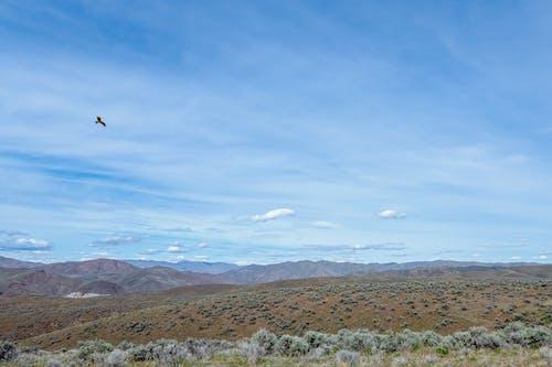 Bird soaring over semi desert mountainous landscape