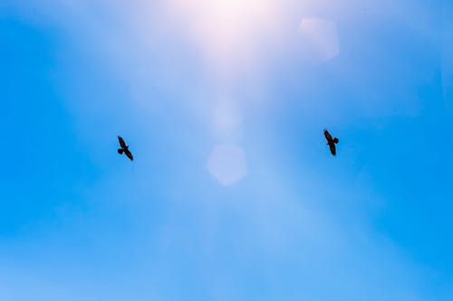 Free birds soaring in clear blue skies