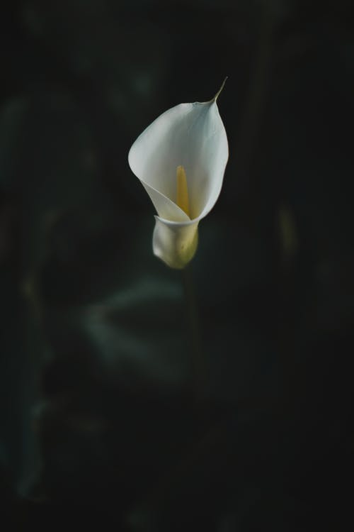 Kostnadsfri bild av abstrakt, blad, blomma, delikat