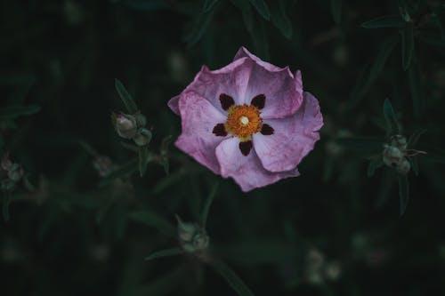 Kostnadsfri bild av blad, blomma, delikat, färg