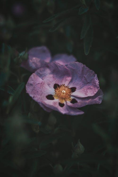 Kostnadsfri bild av blad, blomma, blomning, delikat