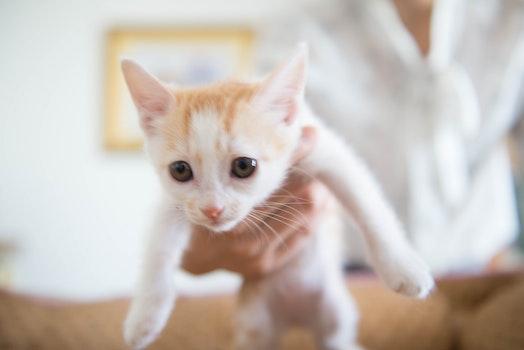 Free stock photo of sweet, cat