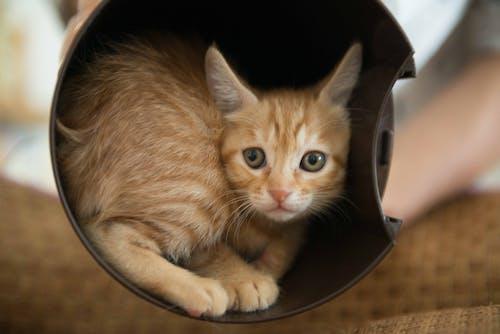 Fotobanka sbezplatnými fotkami na tému mačka, malý, smutný