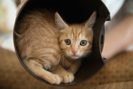 Free stock photo of cat, sad, small