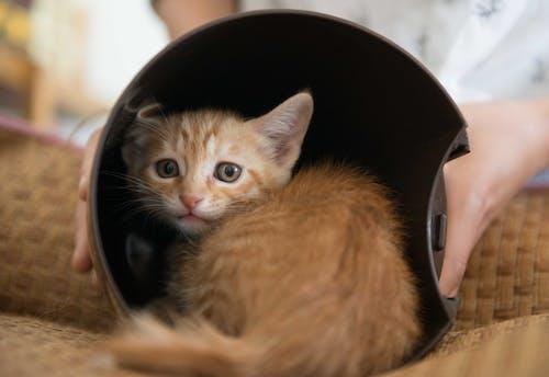 Fotobanka sbezplatnými fotkami na tému mačka, malý, žltá