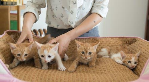 Fotobanka sbezplatnými fotkami na tému dievčatá, mačky