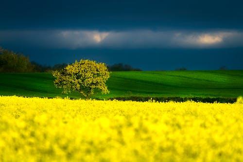 Gratis stockfoto met bewolkt, bloemen, bomen, bruisend