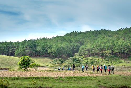 Group of hikers hiking on field in countryside located near green forest against blue sky with fluffy clouds on sunny summer day