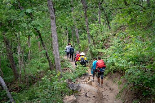 人行道, 健行, 冒險, 助步车 的 免费素材照片
