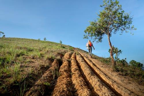 原本, 土, 土壤, 增長 的 免费素材照片