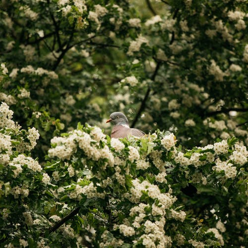 Adorable pigeon sitting on blossoming tree branch on sunny day
