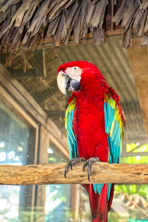 Colorful red and green macaw on tree branch in zoo