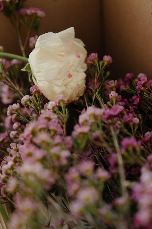 White Flower on Purple Flower