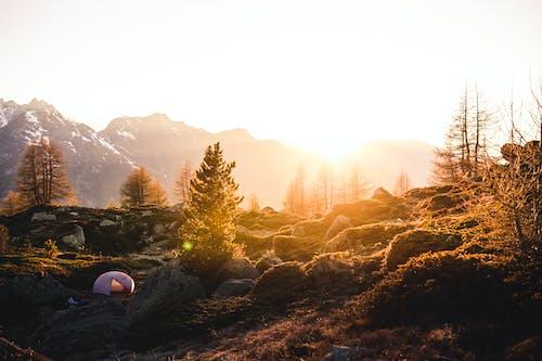 Foto profissional grátis de árvores, brilho do sol, calma, calmo