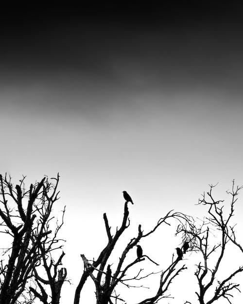 모노톤의, 미니멀, 벌거 벗은 나무, 뷰의 무료 스톡 사진
