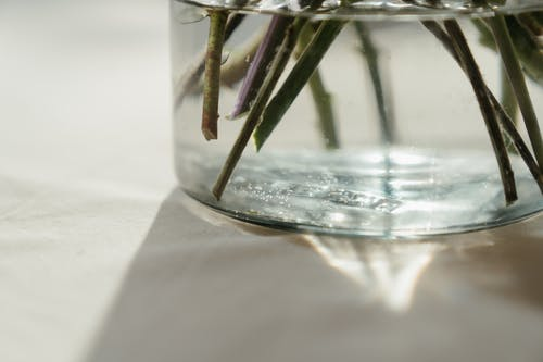 Green Plant in Clear Glass