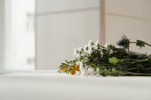 White and Green Plant on White Table