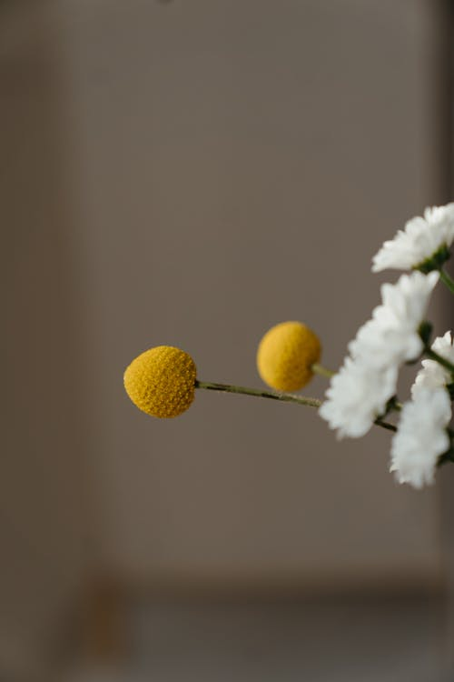 White Flower With Yellow Round Fruits