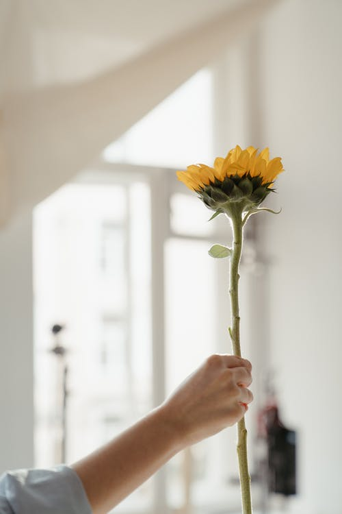 Person Holding Yellow Flower in Close Up Photography