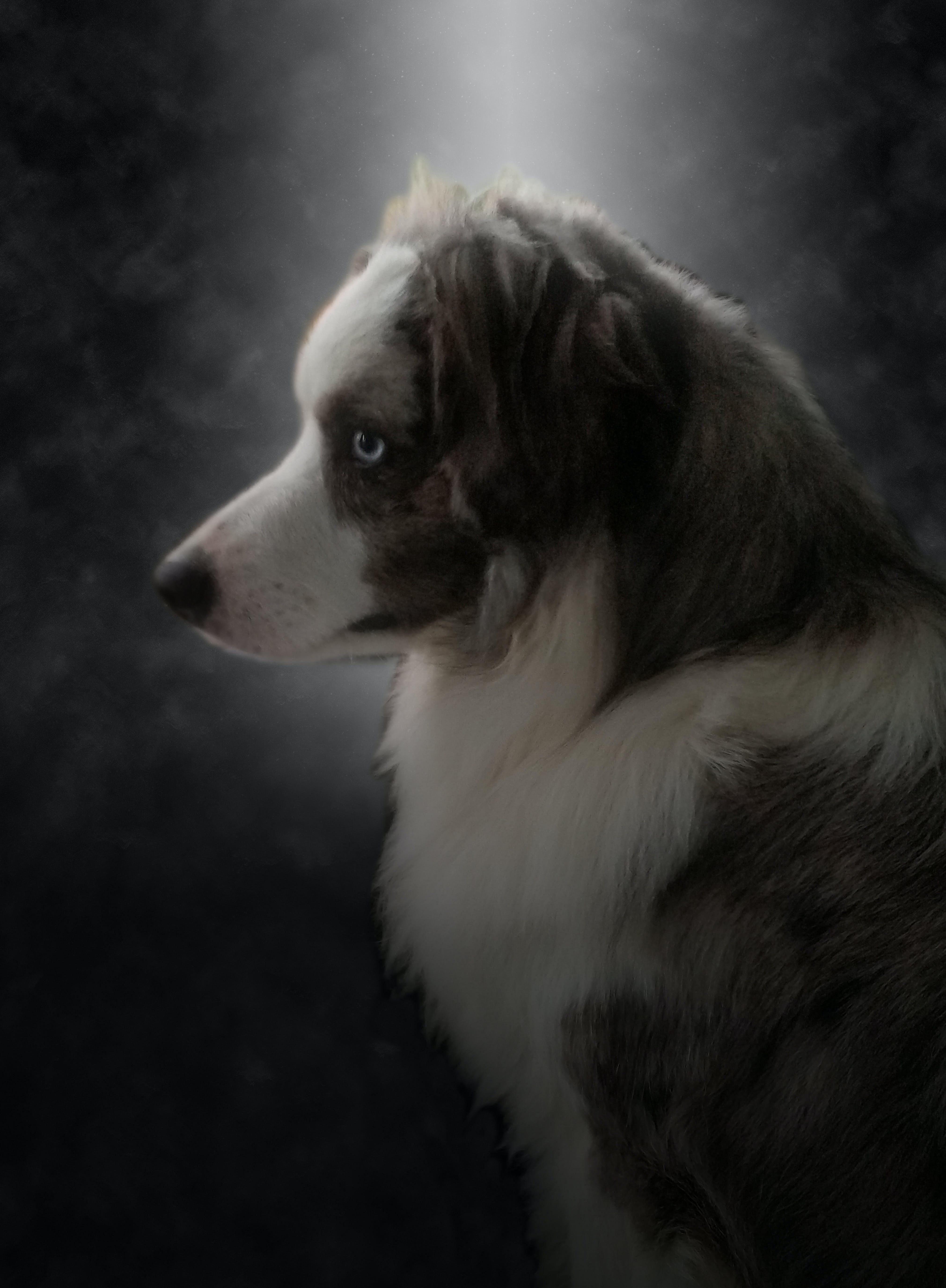 Free stock photo of animal, dog, pet, portrait