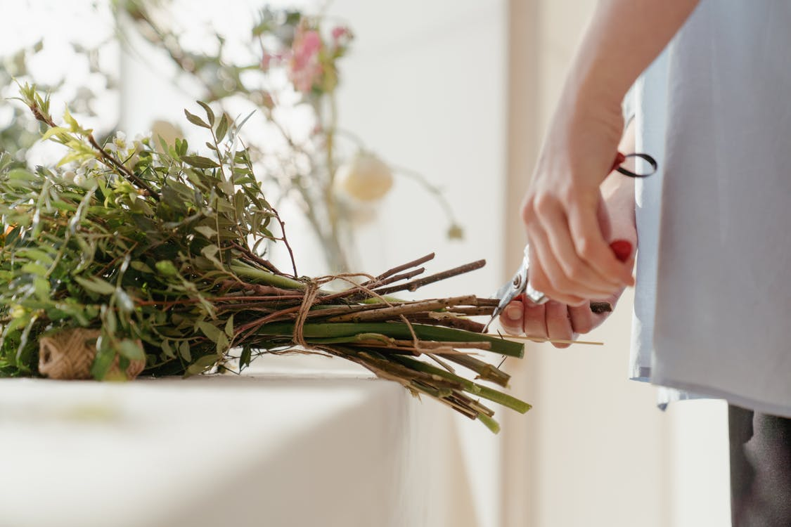 Person Holding Green Plant on White Table