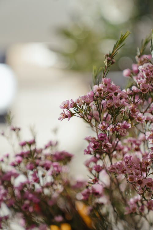 Pink and White Flowers in Tilt Shift Lens