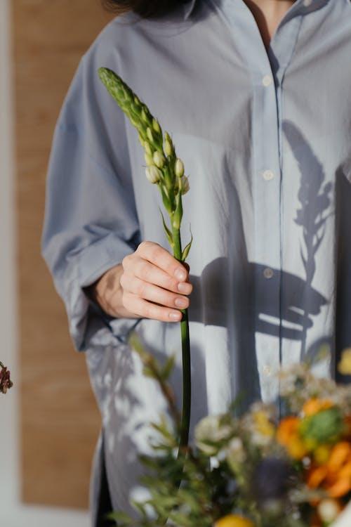 Fotos de stock gratuitas de brotar, brote, camisa azul, camisa en blanco