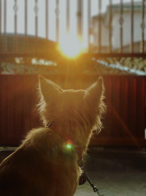 Free stock photo of animal portrait, baby dog, Beautiful sunset, brown