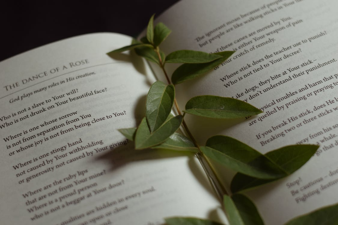 From above of stem of fresh green leaves placed on page of opened book