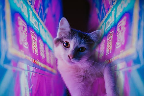 White and Black Cat on Pink and Blue Textile