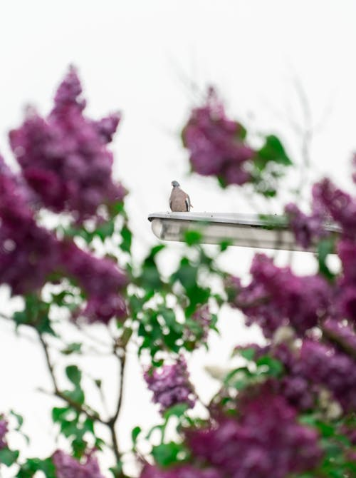Free stock photo of flowers, green, lantern, pigeon