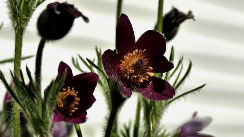 Free stock photo of fioletowy, kwiat, natura
