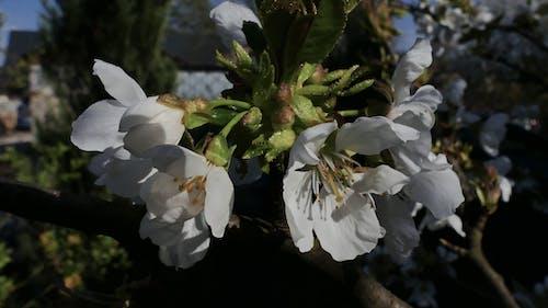 Free stock photo of jedzenie, kwiat, kwitnienie