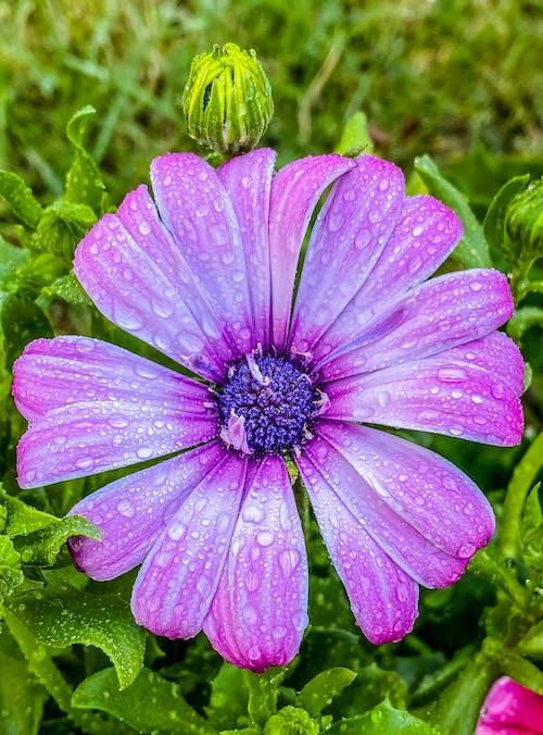 Foto stok gratis bunga, fotografi alam, keindahan di alam, musim semi