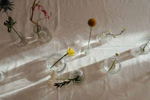 Photo of Flowers in Glass Vase