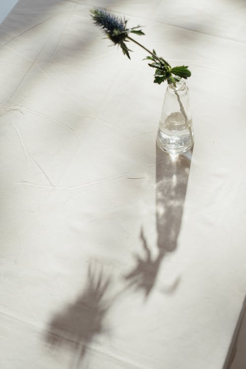 Photo of Flower in Clear Glass Vase